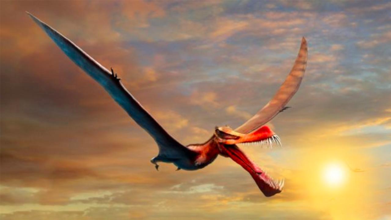 ¿Un dragón? Hallan al dinosaurio volador más grande de Australia