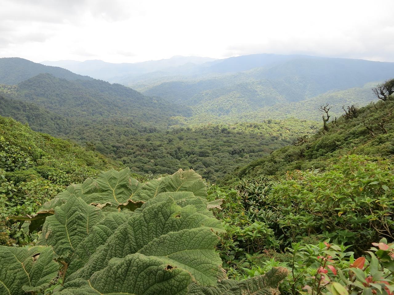 El capital natural de Costa Rica tiene un valor de 14,500 mdd: análisis