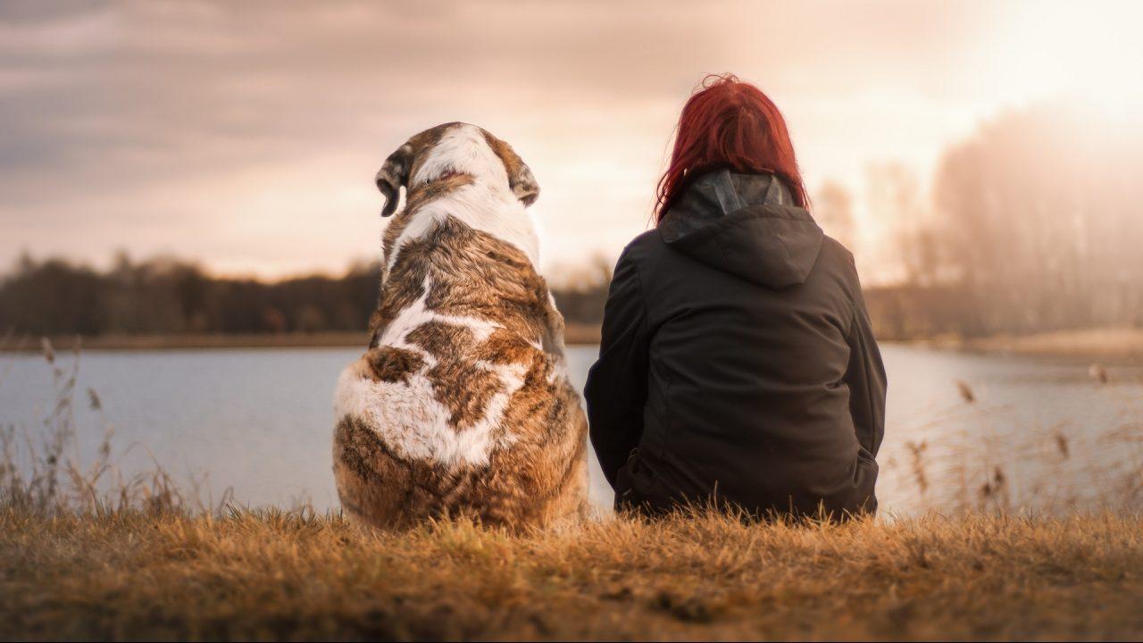 Así ayudan las mascotas a mejorar la salud mental de las personas