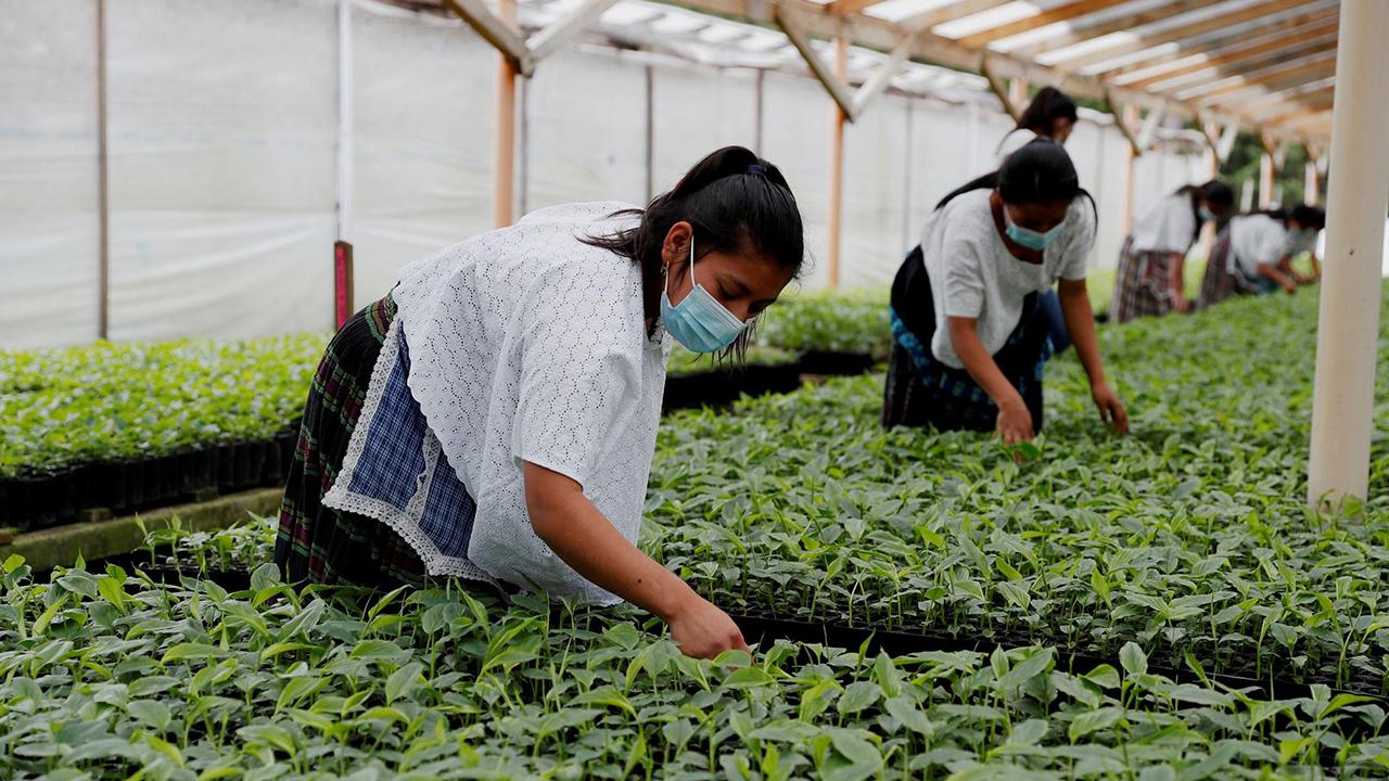 Cambio climático, una 'pandemia' que afecta al sector agroindustrial: BID Invest