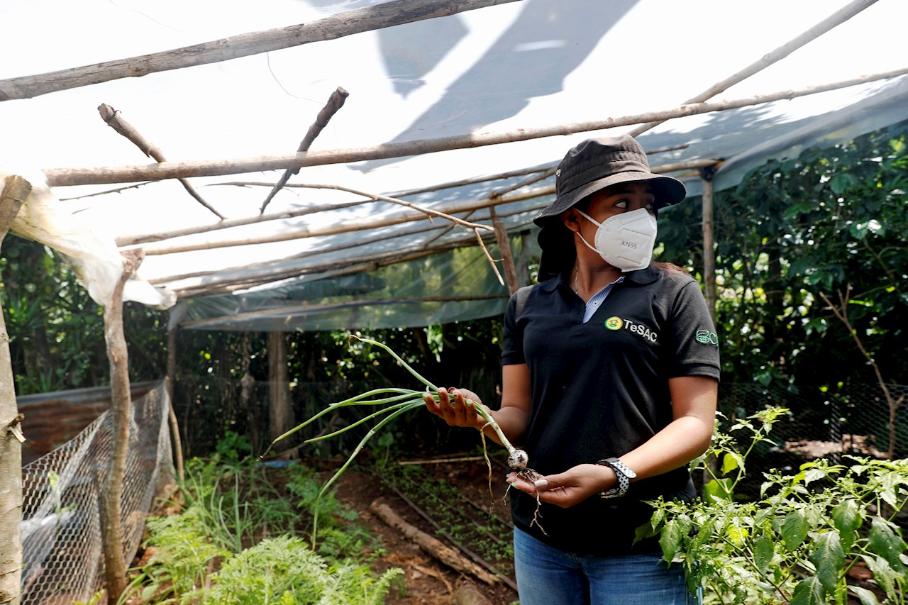 Campesinos ch'orti' de Guatemala atenúan corredor seco