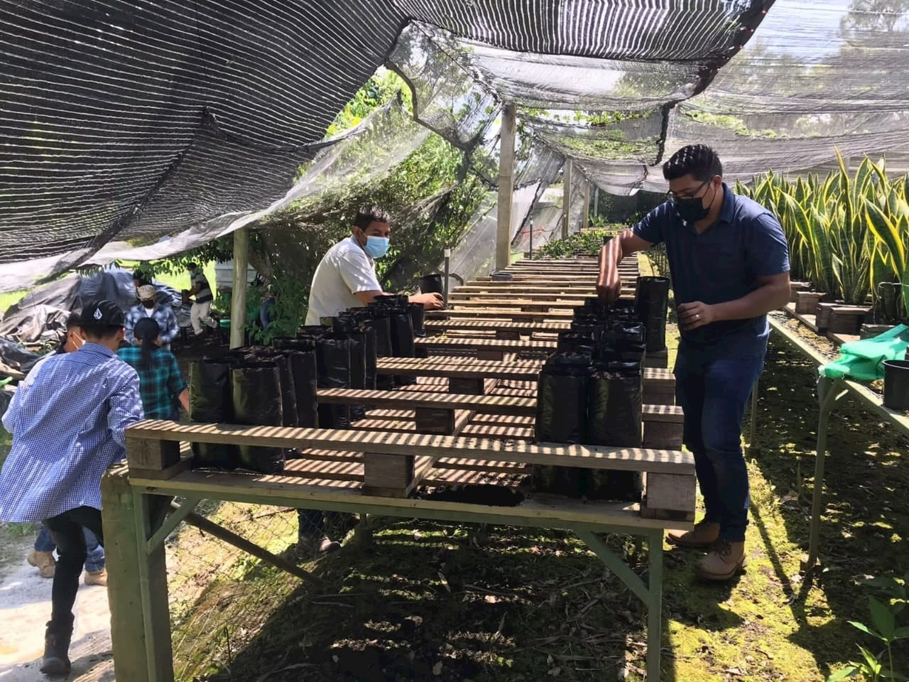 Salvadoreño apuesta por chocolate de excelencia en espacio agroecológico